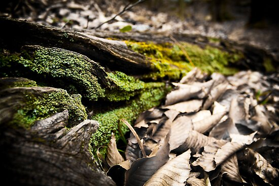 Mossy Roots by bcboscia410
