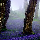 Bluebells in the mist by Charmiene Maxwell-batten