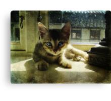 Kitten in the Sun Canvas Print