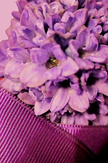 Happy Hyacinth! by aprilann