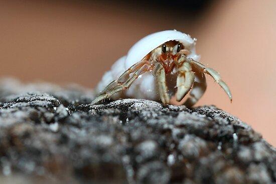 """Glimpses of Marine Life in Andaman"" # 1 by debjyotinayak"