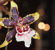 Yellow Tipped Orchid by Linda  Makiej Photography