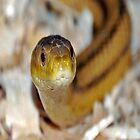 slither, my pet snake by scott staley
