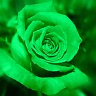 Green Rose by AuntDot
