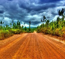 Mountain Pine Ridge Road in San Ignacio - Belize, Central America by 242Digital