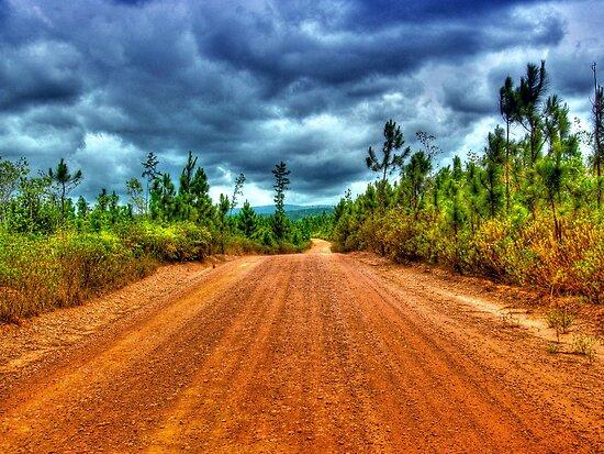 Mountain Pine Ridge Road in San Ignacio - Belize, Central America by 242Digital