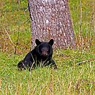 Black Bear in Cades Cove by Terri~Lynn Bealle