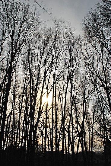 wintery sunset  by Jeff Stroud