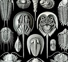Trilobites in Black & White (Aspidonia) by Ernst Haeckel by RedPine
