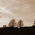 Hedgerow Trees by mikebov