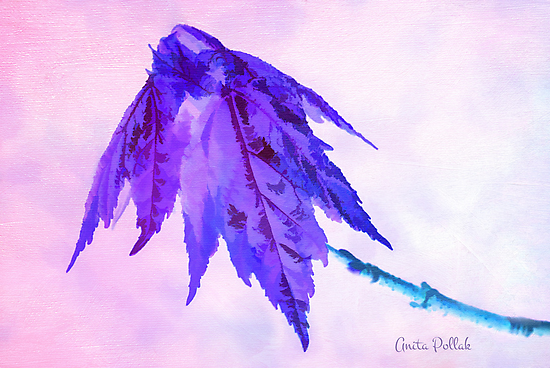 Fanciful Baby Maple Leaves by Anita Pollak