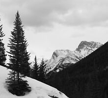 Tall pines (b&w) by zumi