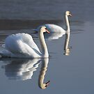 Swan Lake by Heather Thorsen
