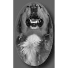 LAUGHING DOG IPHONE CASE by ╰⊰✿ℒᵒᶹᵉ Bonita✿⊱╮ Lalonde✿⊱╮