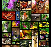 butterfly collage by ArtbyBart