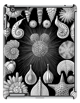 Sea Shells, Starfish, and Fossils in Black and White (Thalamophora) by RedPine