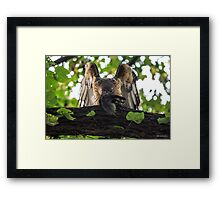 Red Tailed Hawk with Black Squirrel Framed Print