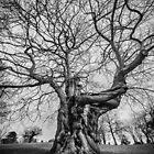 Huge Tree by Svetlana Sewell