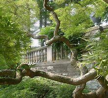 Beautiful Ginkgo Biloba Tree, New Jersey Botanical Garden by Jane Neill-Hancock