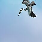 Diving Pelican by Ticker