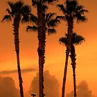 Florida Palm Trees at Sunset - Orlando, Florida by Rick Short