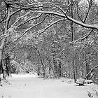 A snowy day in Scarsdale by Daniel Sorine