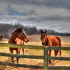 Horse Sanctuary by WestBigSky