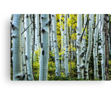 The Maze Of Fall Canvas Print