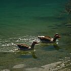geese at kournas lake by konsolakism
