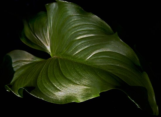 Green Leaf by cclaude