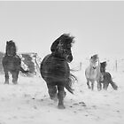 Winter Horses II by johannesfrank