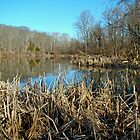 Perkiomen Creek Green Lane Recreational Area - Pennsylvania by MotherNature
