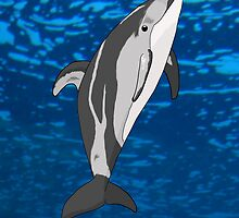 Pacific White Sided Dolphin by Jen Coutu