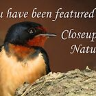 Closeups in Nature Banner by Veronica Schultz