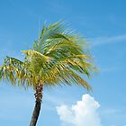 Palm tree in breeze, idyllic scene. by brians101
