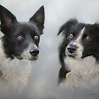 BORDER COLLIES by Peter Skillen