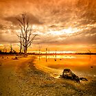 Tree stumps in dry lake - Kings Billabong by hangingpixels
