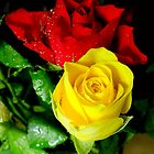 Yellow and red roses by Lorna Taylor