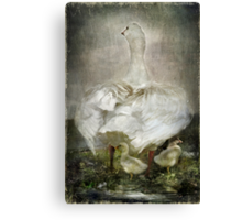 After a Stormy night Canvas Print
