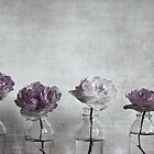 Roses by Anne Staub