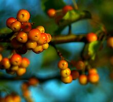 Crabapples by Heather  Andrews Kosinski