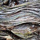 The Texture of Bark by lindsycarranza