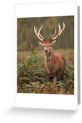 Majestic Red Stag by Patricia Jacobs CPAGB LRPS BPE2