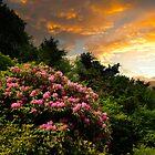 GOD'S BOUQUET AT SUNSET by Randy & Kay Branham