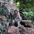 Wild Monkey by Jennifer  Causley