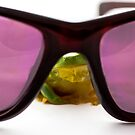 Frog Behind Sunglasses by Donna Rondeau