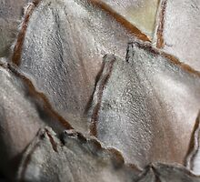 Protea Petals by Joy Watson