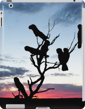 Red-tailed Black Cockatoos in a Desert Sunset by Harvey Schiller