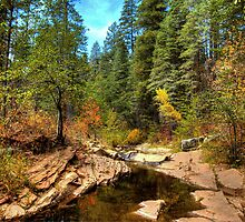 Autumn By The Stream by Diana Graves Photography