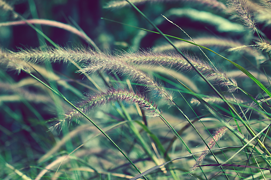 Wild Grass by Susan Tong